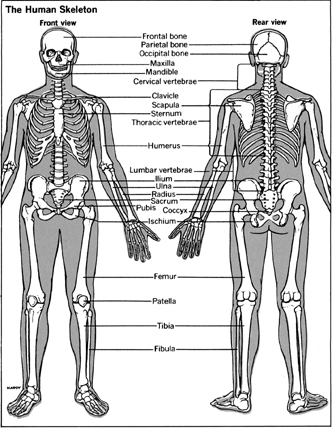 The Biological Basis of Bone & Anatomical Directional Terms (1/6)
