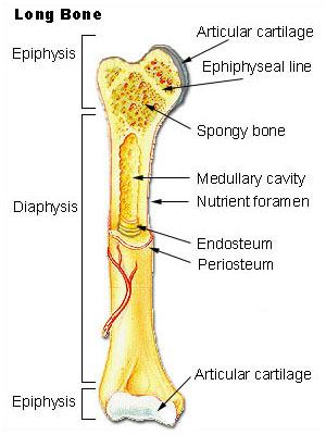 The Biological Basis of Bone & Anatomical Directional Terms (2/6)
