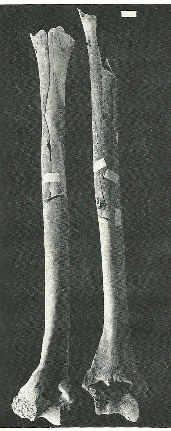 Anasazi These Bones Of Mine