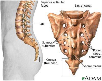 Atlas Axis Vertebrae These Bones Of Mine
