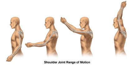 Skeletal Series Part 6: The Human Shoulder (5/6)
