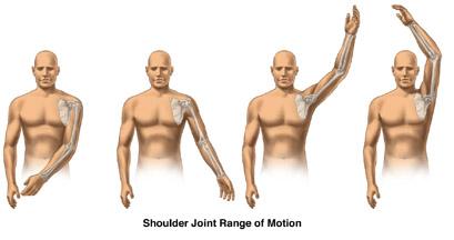 Skeletal Series Part 6: The Human Shoulder (6/6)