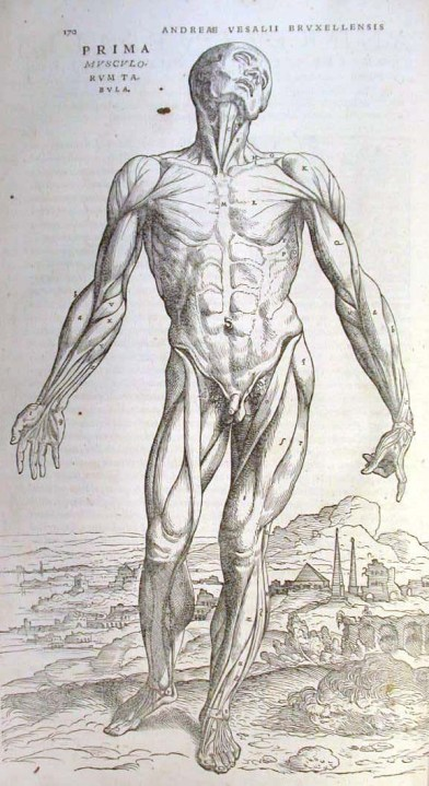 One of the 'muscle men', displaying the superficial anatomy of the major muscles in the anterior view of the human body (source).