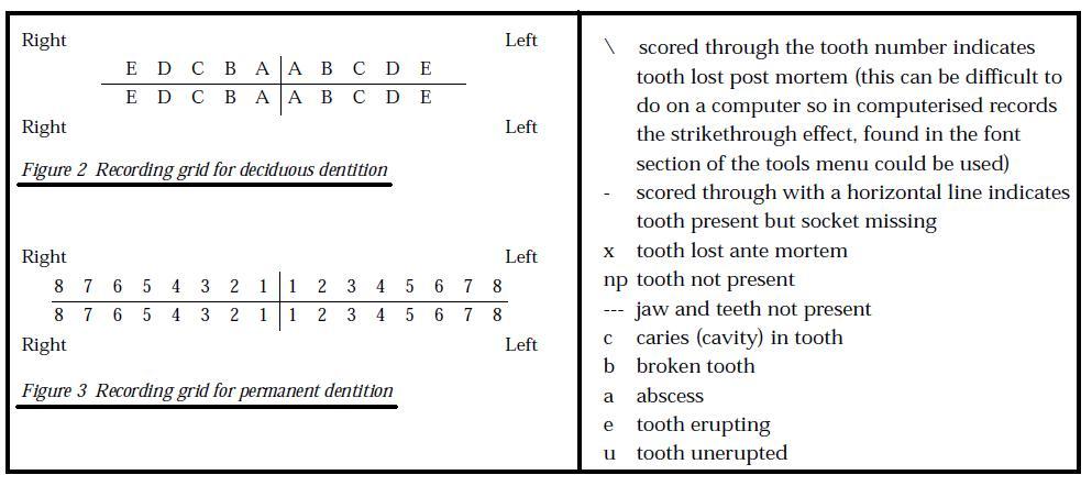 Teeth Development | These Bones Of Mine