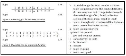 toothrecording